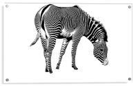 Zebra, Acrylic Print