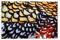 Reeves Pheasant Plumage, Acrylic Print