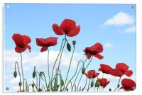 Poppies in the sky, Acrylic Print