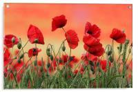 Poppy Field, Acrylic Print