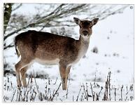 Deer in Wintertime, Acrylic Print