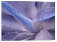 Agave in Shades of Lilac, Acrylic Print