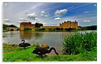 Black Swans at Leeds Castle II, Acrylic Print