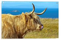 Highland Beauty Highland Cow, Acrylic Print
