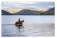Horse at Airds Bay Loch Etive, Acrylic Print