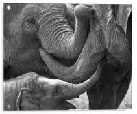 Elephants Tender Touch, Acrylic Print