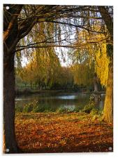 Autumn Colours, Acrylic Print