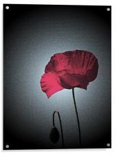 Dark Remembrance Poppy, Acrylic Print
