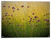 Verbena Flowers, Acrylic Print