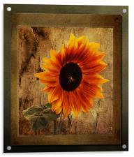 Sunflower Framed, Acrylic Print