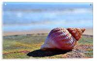 Seaside Sea shell, Acrylic Print