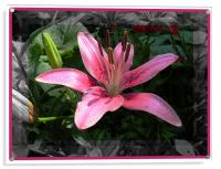 Lily , Acrylic Print