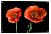 painted poppies, Acrylic Print