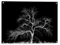 winter tree, Acrylic Print