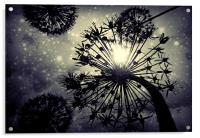 Allium sky, Acrylic Print