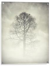 the winter tree, Acrylic Print