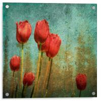 textured tulips, Acrylic Print