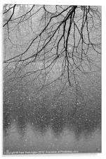 Snow and tree., Acrylic Print