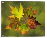 Autumn composition, Acrylic Print