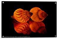 Illuminated Sea shells, Acrylic Print