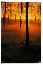 Sunrise through the Trees, Acrylic Print