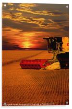Harvest Summer Sunset, Acrylic Print