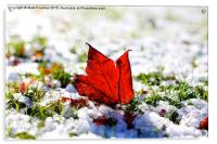 Last Autumn Leaf Standing in First Snow of Winter, Acrylic Print