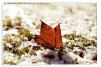 Last Autumn Leaf Standing in First Snow of Winter , Acrylic Print
