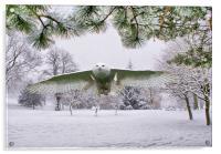Snowy Owl In Winter Wonderland, Acrylic Print