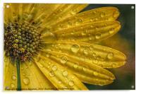 After The Rain., Acrylic Print