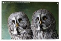 Double Take, Pair of Owls, Acrylic Print