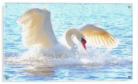 The White Swan, Acrylic Print