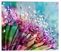 Dewdrops And Rainbows, Acrylic Print