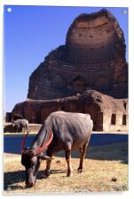 Buffalo Grazing by Bahamani Tombs at Ashtur, Acrylic Print