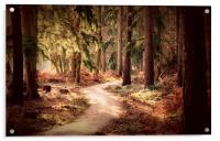 Woodland Walk, Acrylic Print