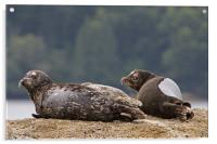 Seals, Acrylic Print