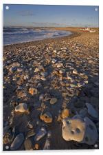 Rocky beach, Acrylic Print