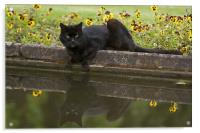 Mirror cat, Acrylic Print