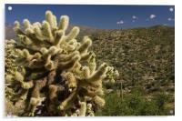 Saguaro East, Acrylic Print