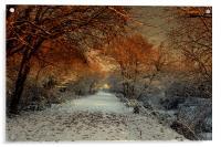Winter Colour, Acrylic Print