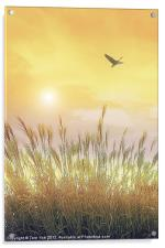 FIELDS OF GOLD, Acrylic Print