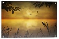 AMBER MORNING, Acrylic Print