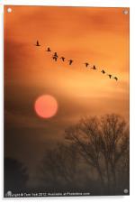 HOT SUMMER FLIGHT, Acrylic Print