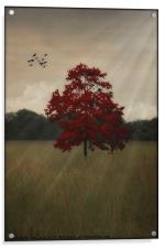 A TREE IN AUTUMN, Acrylic Print