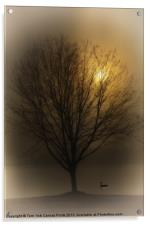 GOLDEN LIGHT, Acrylic Print