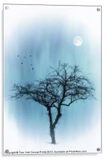 A TREE IN BLUE, Acrylic Print