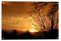 SNOW GEESE AT SUNSET, Acrylic Print