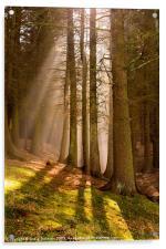 Deanclough forest, Acrylic Print