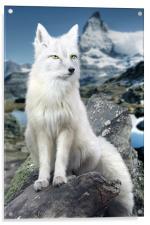 White Fox at Matterhorn, Acrylic Print