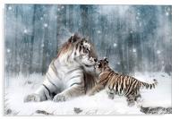 Kaiser Katrina and the Kiss Tiger Canvas Print, Acrylic Print